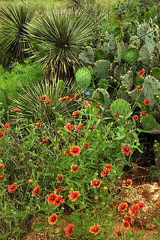 Robert Anschutz - Wildflowers and Cacti