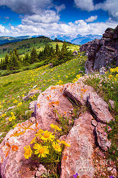 Wildflowers and Pink Rocks by Peter Castricone