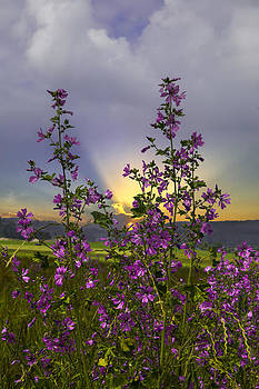 Debra and Dave Vanderlaan - Wildflowers
