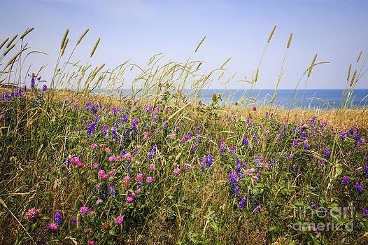 Elena Elisseeva - Wildflowers in summer meadow