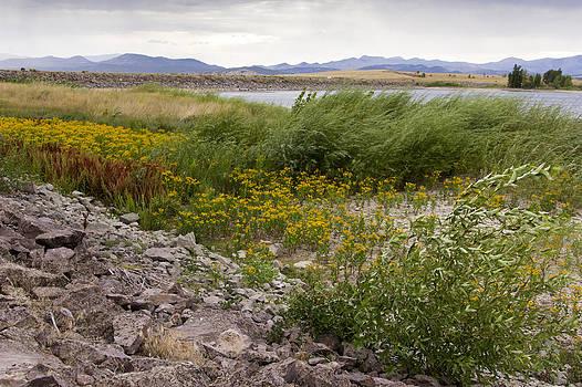 Wildflowers in the wind by Dana Moyer