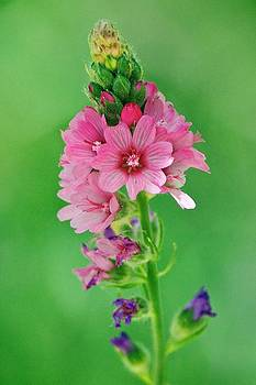 Wildflowers by Joe Urbz