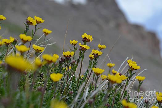 Kate Avery - Wildflowers
