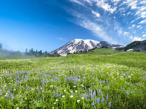 Wildflowers on Mt. Rainier by Kyle Wasielewski