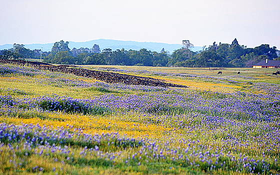 Wildflowers on Table Mountain by AJ  Schibig