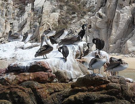 Wildlife in Cabos San Lucas by Wendy  Beatty