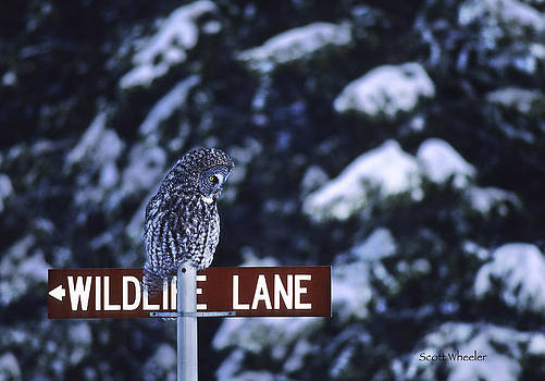 Scott Wheeler - Wildlife Lane