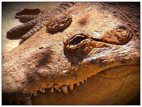 Wildlife photography  by Sri venkat Subu