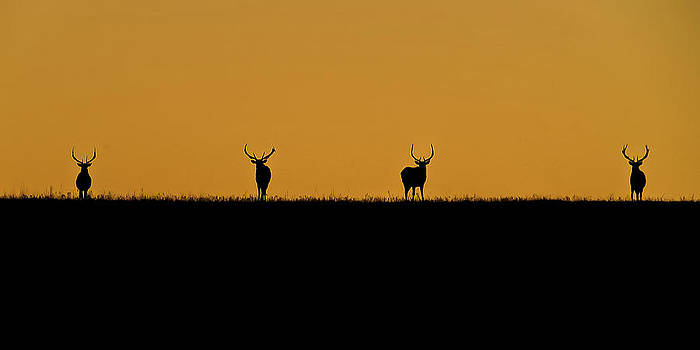 Wildlife Sunrise by Garett Gabriel