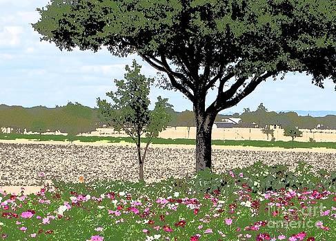 Wildseed Farm by Marsha Young
