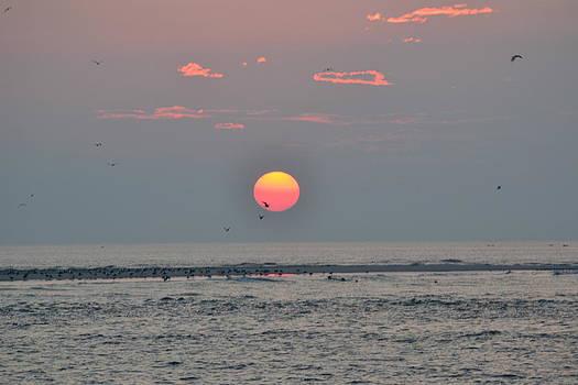 Wildwood Sunrise with Seagulls by Tim Toomey