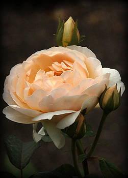 Rosanne Jordan - Will You Love Me Rose
