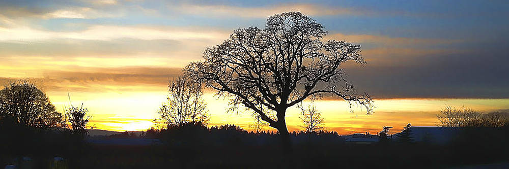 Willamette Valley New Year Sunset IMG 0284 by Torrey E Smith