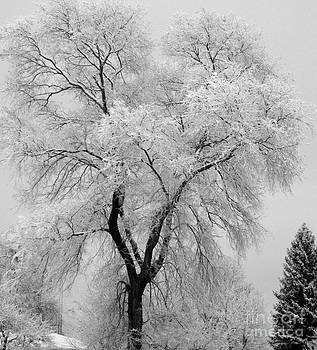 Willow covered in snow by Kathy DesJardins