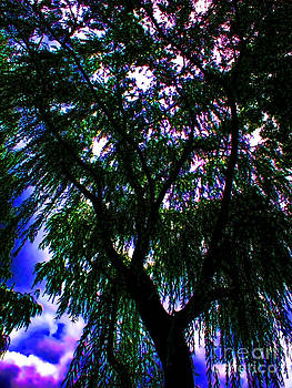 Willow on Steroids by Anne Ferguson