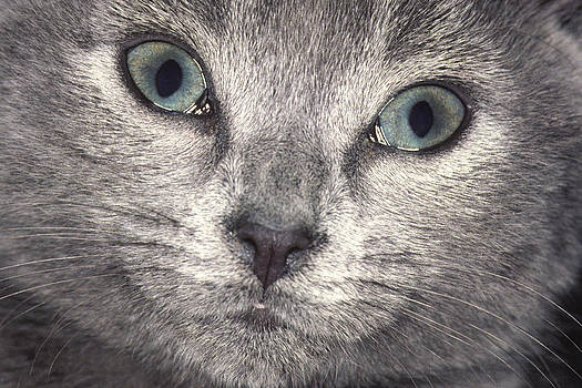Willow The Cat As A Kitten by Austin Brown