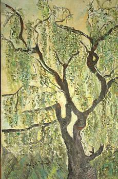 Willow Tree by Aleezah Selinger