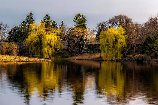 Willow Trees at Silver Lake by Tom Gort