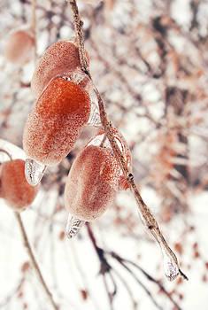 Willow's fruits. by Victoria  Kostova