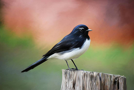 Michelle Wrighton - Willy Wagtail Austalian Bird Painting
