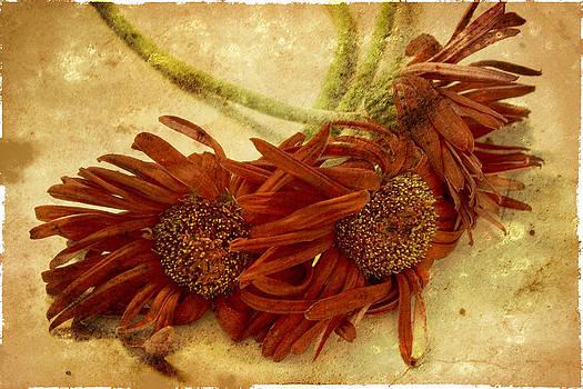 Regina  Williams  - Wilting Flower