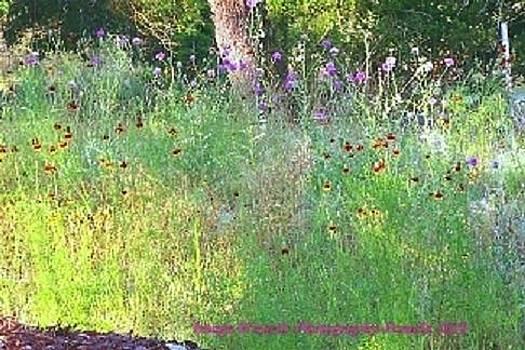 Pamela Smale Williams - Wimberly Wildflowers