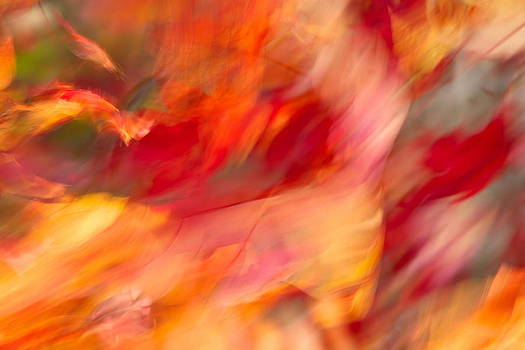 Wind and the Autumn Leaves by Nathaniel Kidd