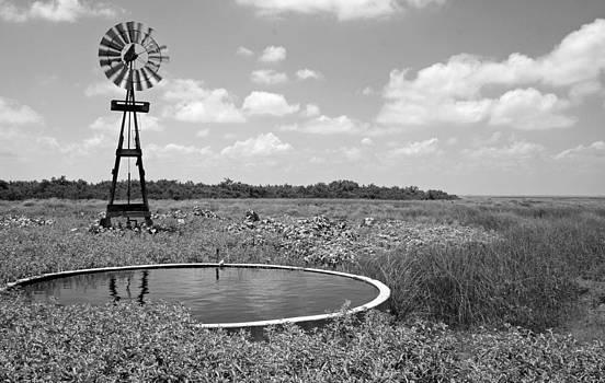 Bonnie Davidson - Wind and Water
