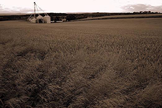 Wind in the Grain by M Hess