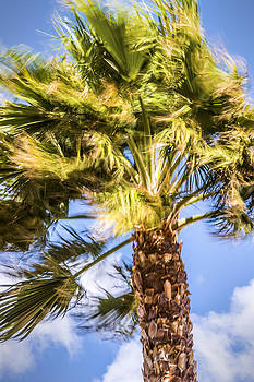 onyonet  photo studios - Wind in the Palm Tree