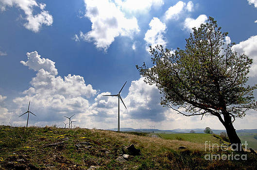 BERNARD JAUBERT - Wind turbine and tilted tree isolated in the countryside.