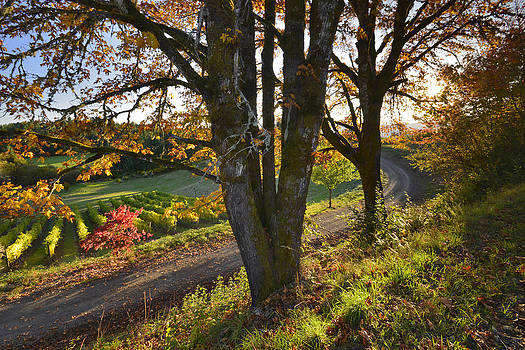 Winding road past vineyards in Oregon by Steve Terrill