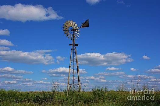 Windmill in a Pasture by Robert D  Brozek