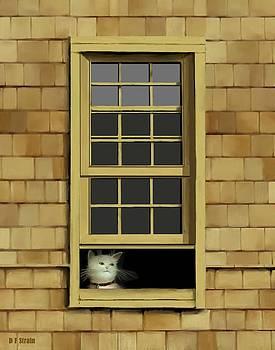 Window Cat    No.4 by Diane Strain