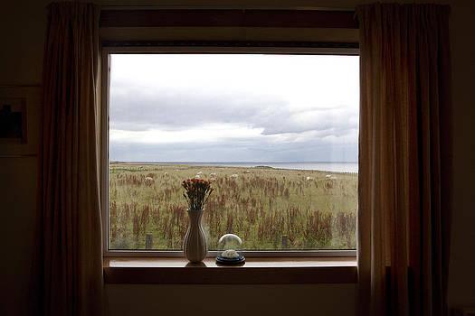 Window by Jana Sebestova