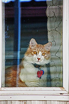 Window kitty by Dan Quam