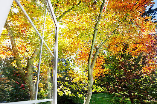 Jo Ann Snover - Window opens to fall garden