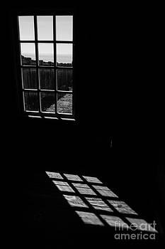 Window by Tim Tolok