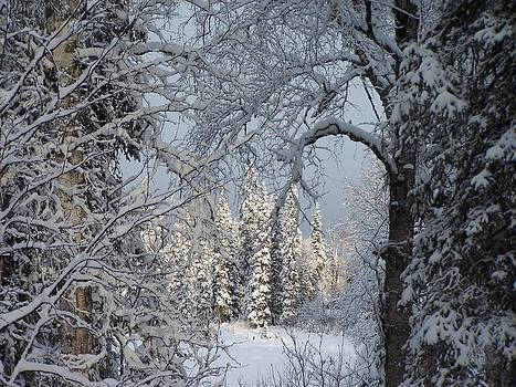 Window To Winter by Shelly Rochon