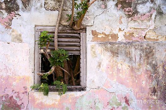 Oscar Gutierrez - Window Tree