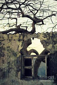 Window by Vishakha Bhagat