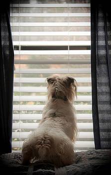 Window Watcher by Soccer Dog Design