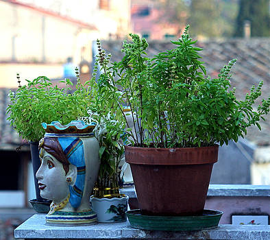 Susan Leake - Windowsill herbs Italy