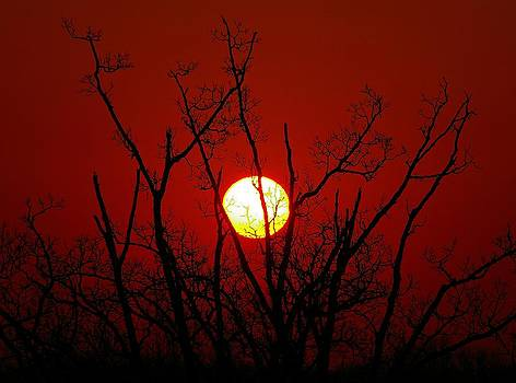 Windsor Sunrise by Sean Murray