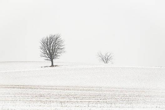Alan Norsworthy - Windswept 2