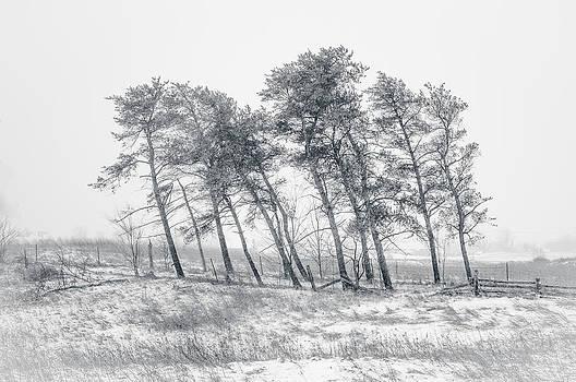 Alan Norsworthy - Windswept