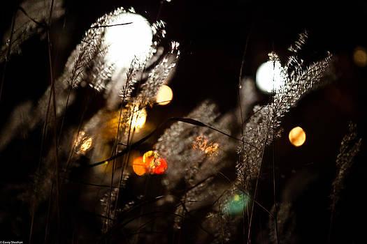 Windy Lights by Corey Sheehan
