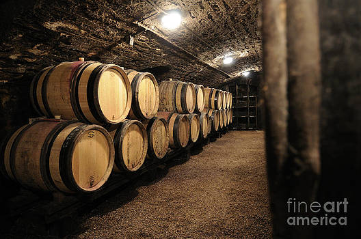 BERNARD JAUBERT - Wine barrels in a cellar. Cote d