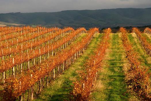 Kathy Peltomaa Lewis - Wine Country Adelaide Hills
