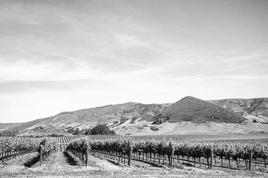 Priya Ghose - Wine Country Edna Valley In Black And White